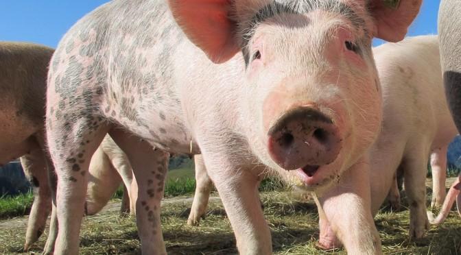 Labelfleisch: Sekretariat der Weko lässt sich nicht instrumentalisieren